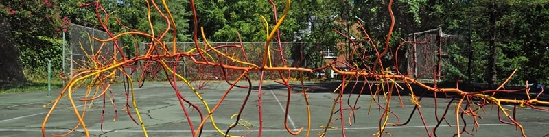 Dalya Luttak, When Nature Takes Over, 2011. Painted steel, roots and vines. Photo by Greg Staley.