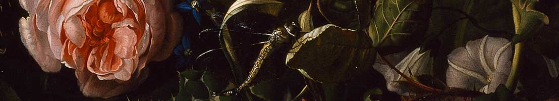 Detail of Rachel Ruysch's painting—click here to see more of NMWA's art on the Google Art Project