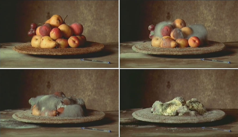 Screenshots of Sam Taylor-Johnson's Still Life. Click to watch the full video.