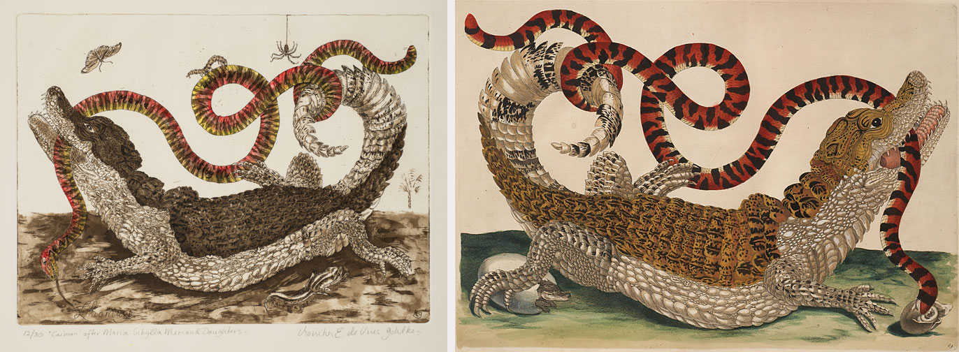 "Left: Monika E. de Vries Gohlke, ""Caiman"" After Maria Sibylla Merian and Daughters, 2012; Etching and aquatint, hand colored, on paper, 11 1/4 x 15 1/4 in.; NMWA, Gift of the artist; Right: Maria Sibylla Merian, Plate 69 from Dissertation in Insect Generations and Metamorphosis in Surinam, 2nd Ed., 1719; Hand-colored engraving on paper, 14 1/4 x 20 1/2 in.; NNMWA, Gift of Wallace and Wilhelmina Holladay"