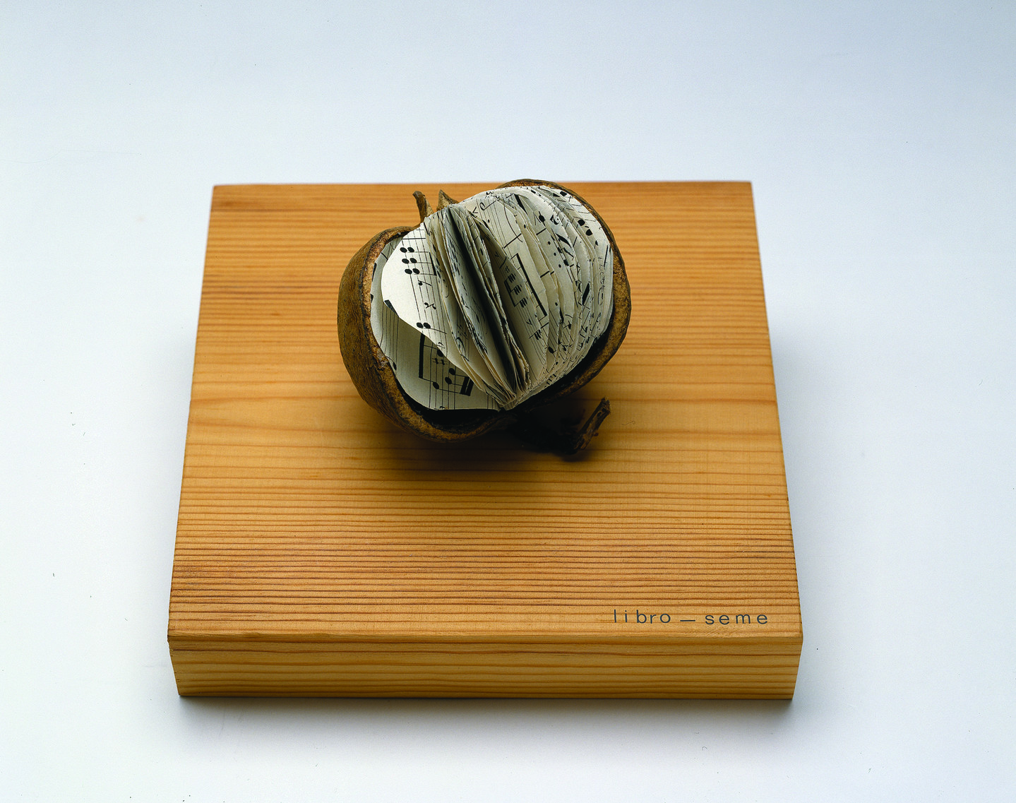 The small seed of a tropical fruit sits on top of a square wooden base that reads Libro-Seme. Inside the seed are cut sheets of music filling the seed like a book.