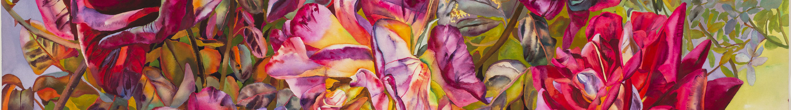 Long and thin horizontal crop of a larger artwork features a closeup detail of watercolor roses in vibrant bloom in shades of hot pink, violet, and yellow with thick leaves surrounding.