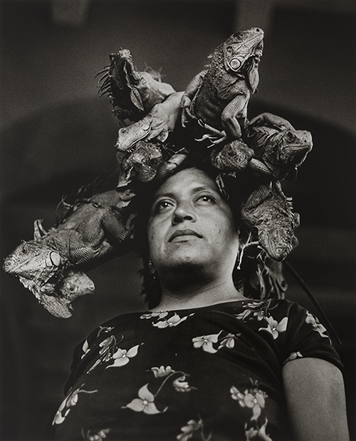 This famous photograph depicts Zobeida Díaz on her way to the market, carrying the iguanas she will sell on her head. Iturbide photographs Díaz from below to create a sense of authority; at this angle, Díaz becomes larger than life. Iturbide frames her in a dignified pose within an archway. The iguanas, an important cultural symbol of the Zapotec, encircle her head like a halo. It is an image of reverence for Zapotec women.