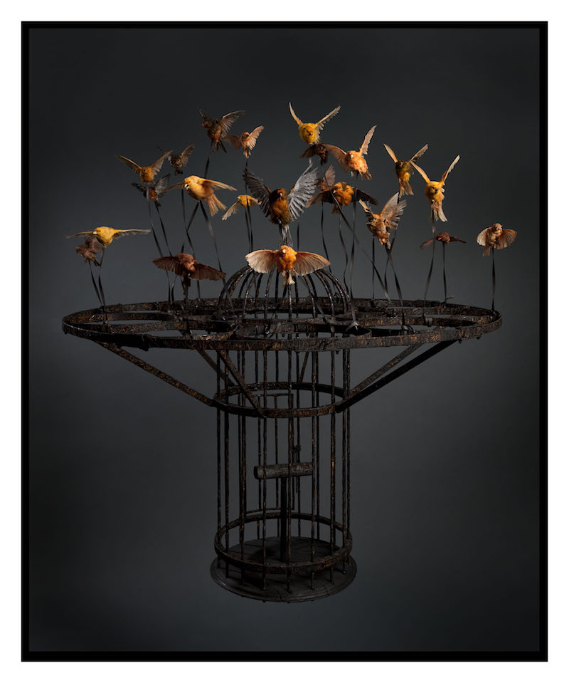 Large, black steel birdcage held aloft by over a dozen orange and yellow songbirds in flight, tethered to the cage by wires.