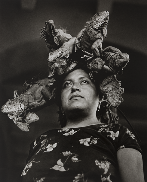 A black and white portrait photo taken from a low angle of a woman wearing a black blouse with floral detail on it; she stares stoically off into the distance and on her head are six large live iguanas, which she is selling at a market.