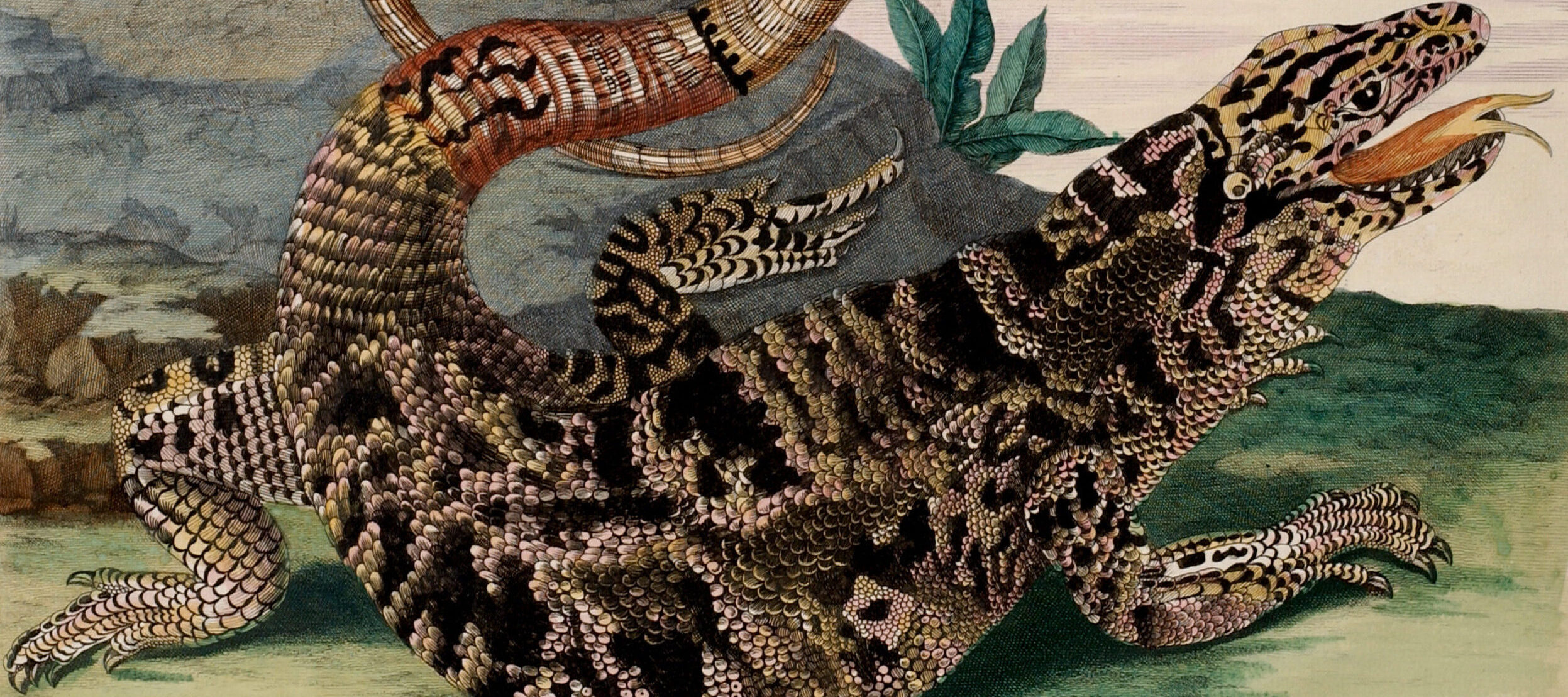 A detailed engraving portrays a large, black and tan lizard in precise detail. Facing right and positioned in front of a gray rock, the reptile extends its red, forked tongue. The reptile curls its lengthy tail into an O-shape suspended decoratively above its scaly torso.