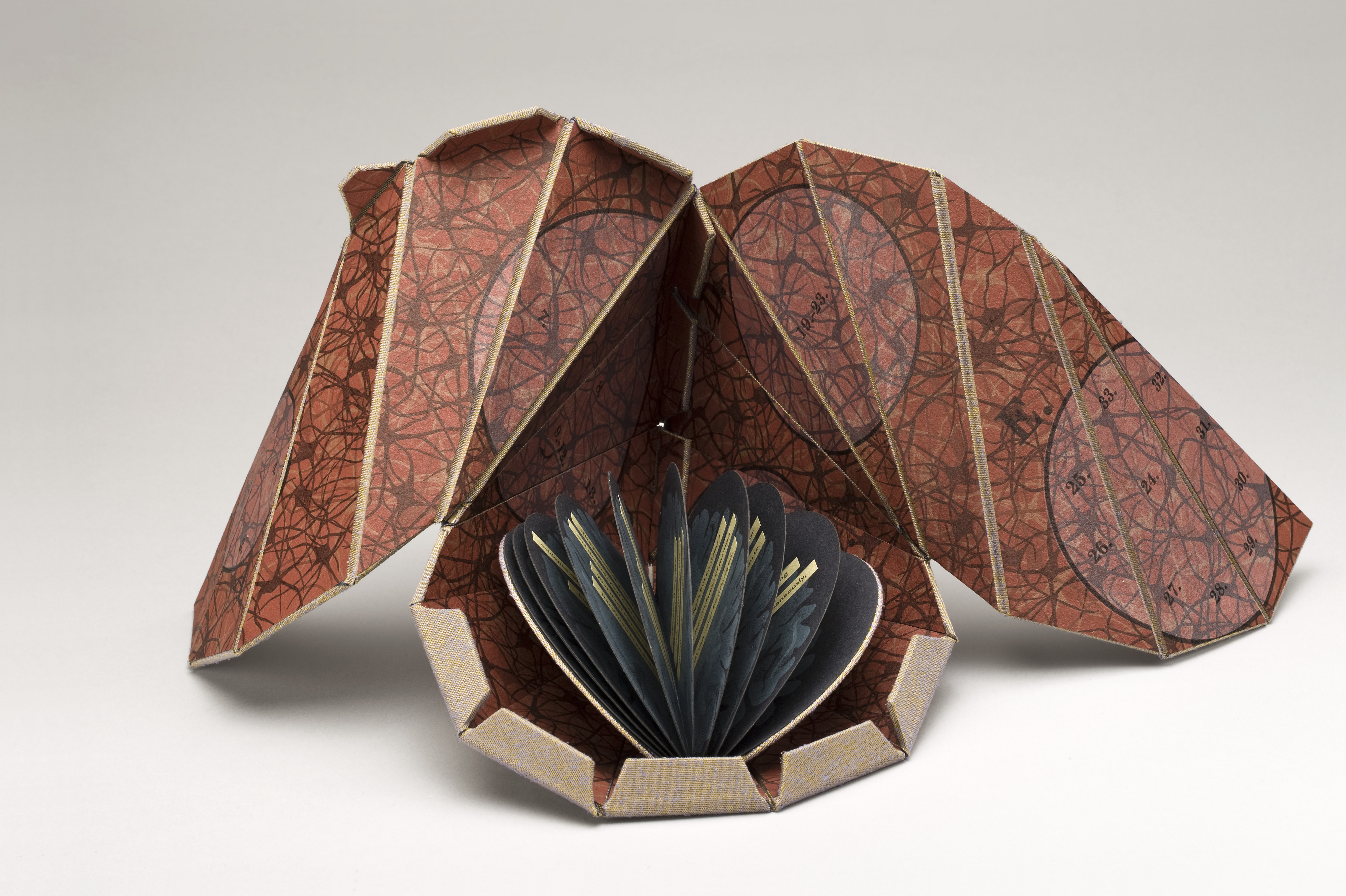 An open artist's book that is teardrop-shaped with two open flaps that resemble wings. The interior is an earthy red color with veiny brown lines. Inside the open teardrop shape is a tiny circular book with navy half-moon shaped pages.