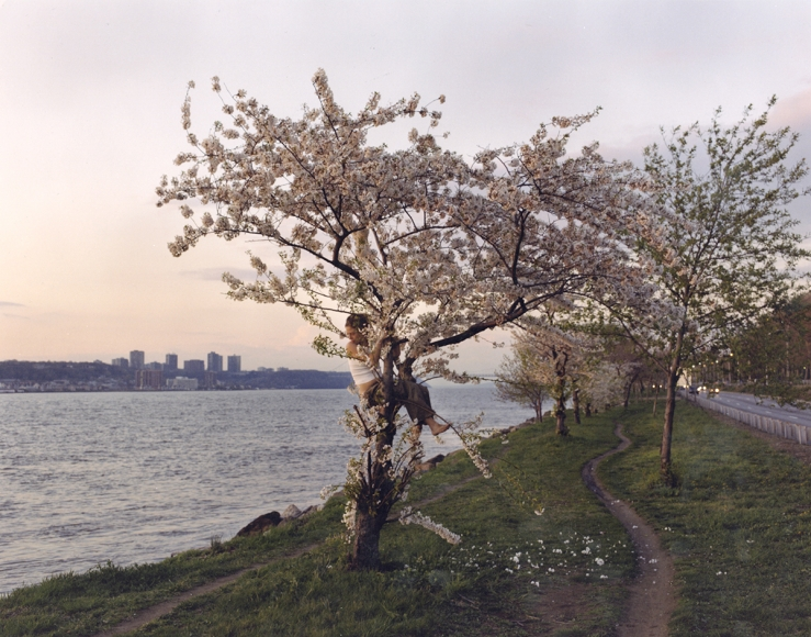 A light-skinned young woman sits in the fork of a cherry blossom tree, her head turned toward the water on the left. To her right, pink trees stand in a row, and to her left is the shore of a large body of water before a small skyline of six buildings.