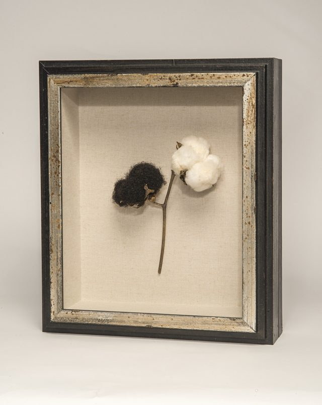 A black framed sculpture of a branch of a cotton plant against a white background. The stem of the plant is bronze, and splits to lead to two bolls at its top. The right boll is made of cotton, while the left boll is made of black, curly hair.