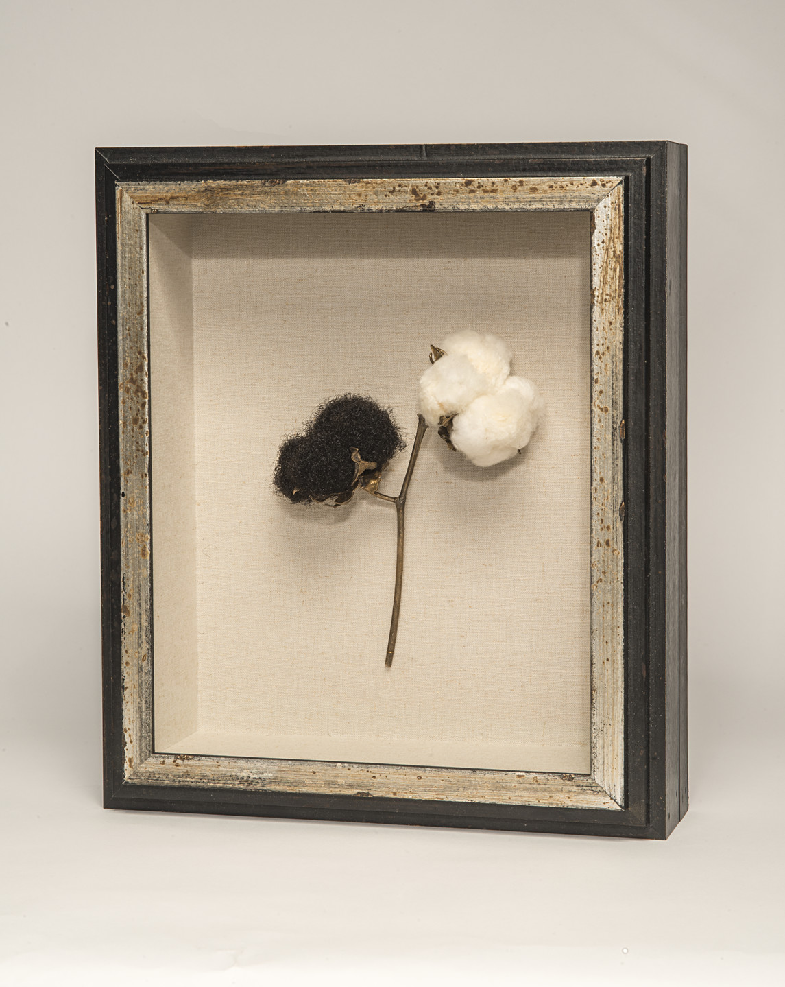 A framed sculpture of a branch of a cotton plant. The stem of the plant is bronze, and leads to two bolls at its top. The right boll is made of two cotton, while the left boll is made of black hair.
